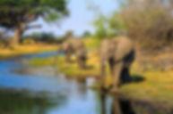 Olifanten 14.jpeg