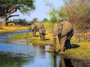Bezienswaardigheid Botswana – Chobe National Park