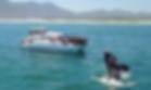 Walvissen spotten.jpg