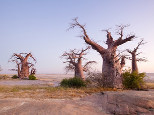 Bezienswaardigheid Botswana – de Makgadikgadi Salt Pans