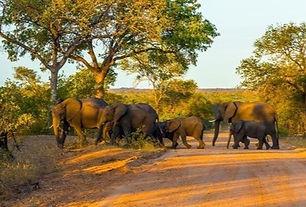 Olifanten Zuid-Afrika en Botswana.jpg