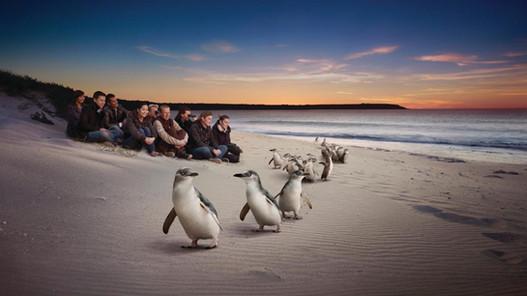 Penguin parade 10 min away