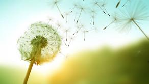 Power-Maßnahmen gegen Allergien und deren Reaktionen