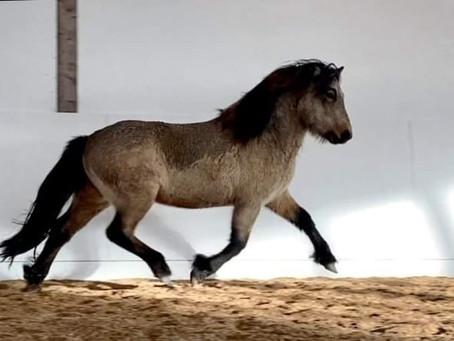 Aðalbjörn, born 2018, stallion