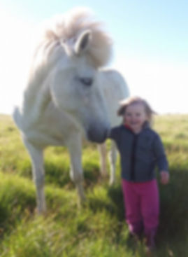 breeding icelandic horses