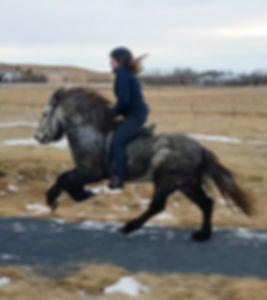 Horse trainer Erla Björk Tryggvadóttir
