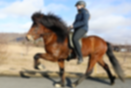 training horses in Selfoss