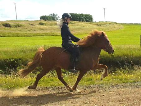 Telpa, born 2010, mare