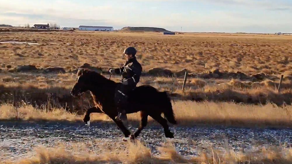 Píla is a tall, 6 year old mare after Konsert frá Hofi with high movement in tölt.