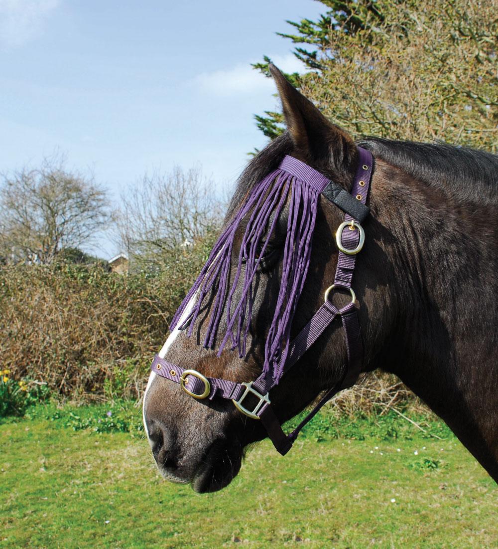 341-purpleweb