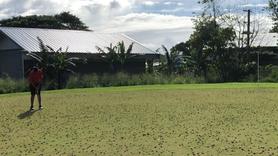 Samoa 2019