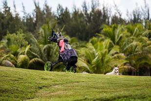 Golf - Trophée - 14-15.11 (107 sur 174)