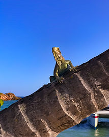 "A friendly iguana pops up to say ""hi"""