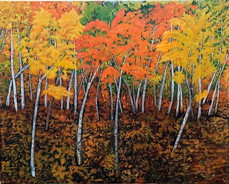 Aspen trees Giclee