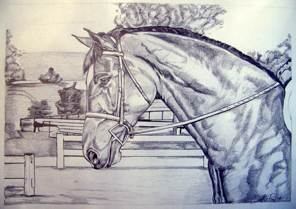 graphite horse1.jpg