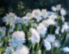 Shasta Daisies.jpg