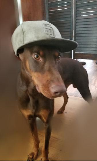 Dog!.jpg