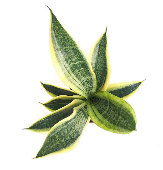 Buy House Plants Online