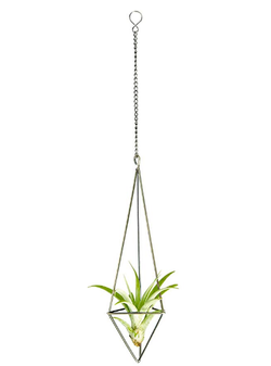 Hanging Air Plant Holder