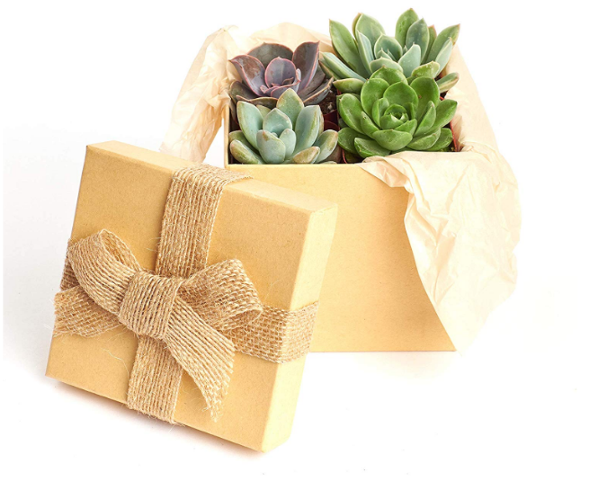 Succulent Holiday Gift