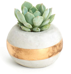 Orb Planter and Succulent