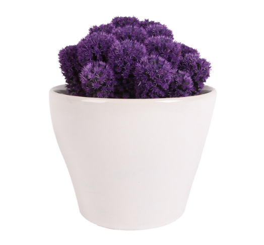 Purple Cactus in Ceramic Pot