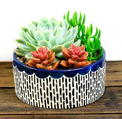 Blue Ceramic Planter with Succ