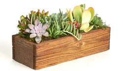 Wood Planter with Live Succulents