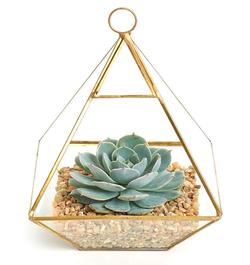 Geometric Terrarium with Succulent.