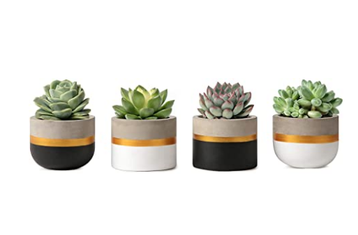 Modern Concrete Mini Planters Set of 4