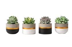 Modern Concrete Mini Planters Set of 4