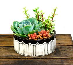 Scalloped Ceramic Planter with Suc