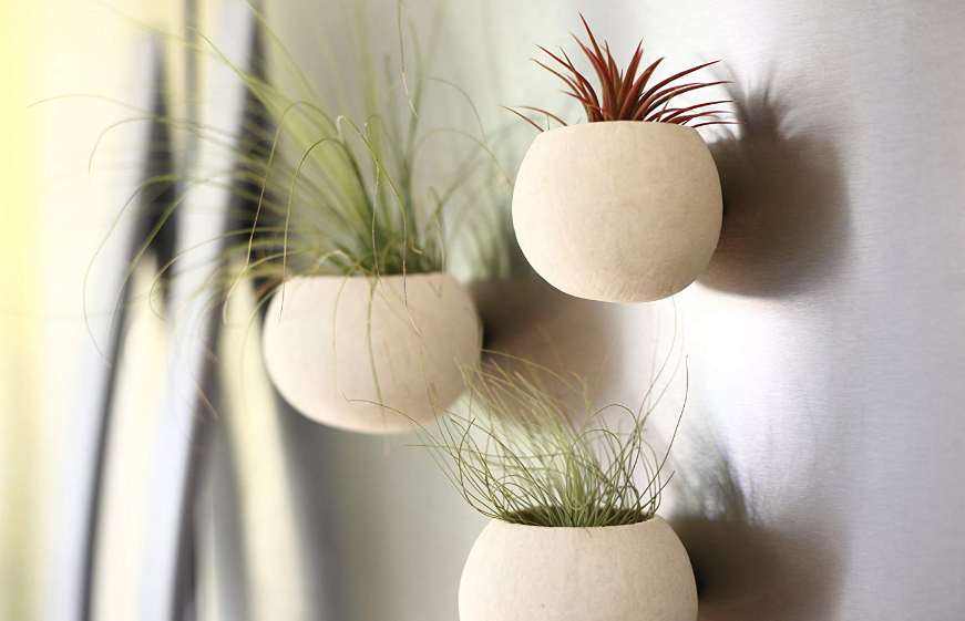Magnet Planter Trio with Air Plants