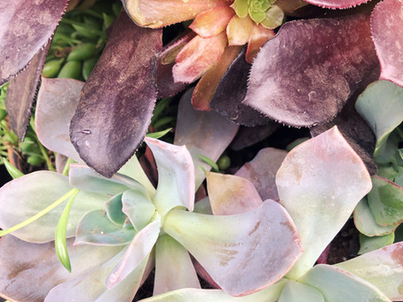 Growing Succulents - A Quick And Easy How-To Guide