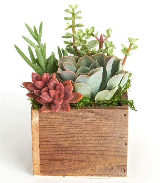 Table Centerpiece Succulent Planter