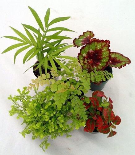 Terrarium Plant Set