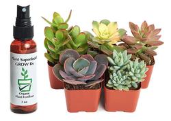 Succulent Set of 5 Plus Plant Food