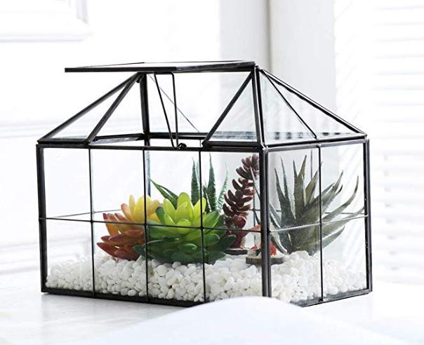 Modern Glass Terrarium