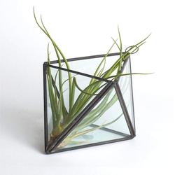 Prism Terrarium with Air Plant
