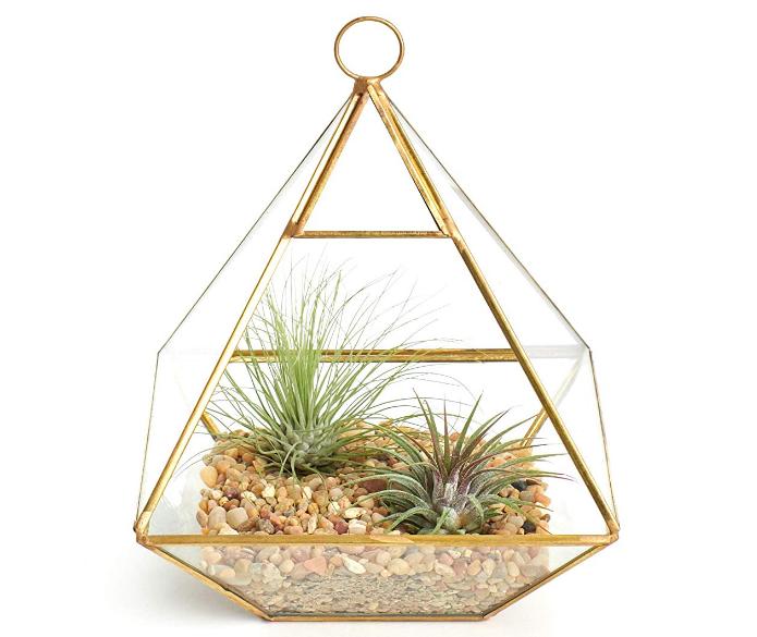 Geometric Terrarium with Air Plants