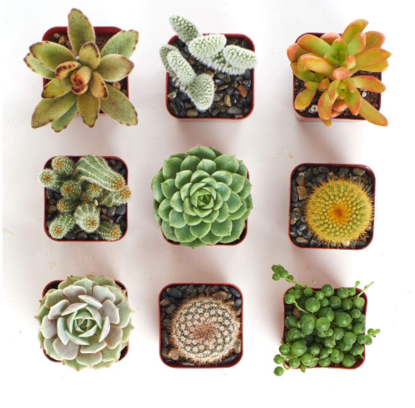 Cactus and Succulent Set of 9