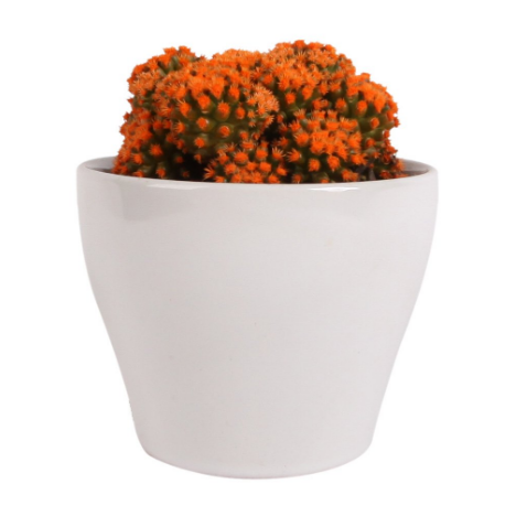 Orange Cactus in Ceramic Pot