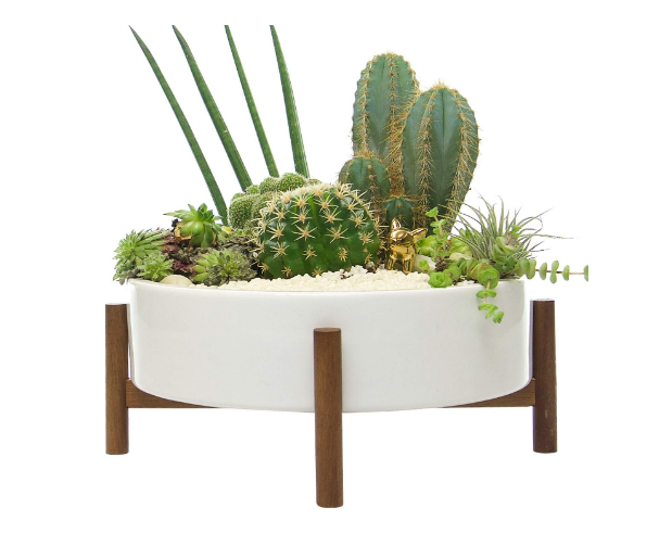 Modern Cactus Planter