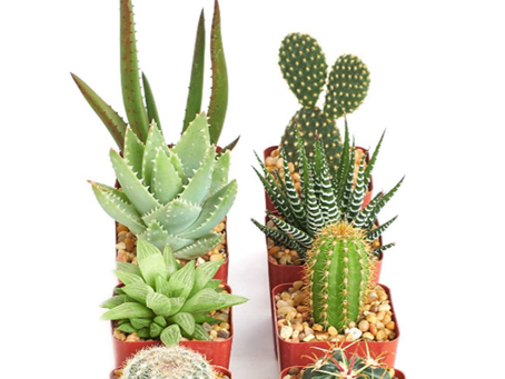 5 Tips For Keeping an Indoor Cactus