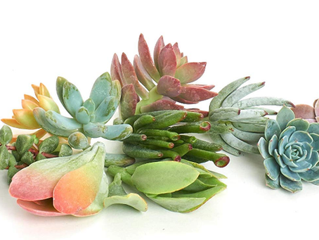 How To Root Succulent Plants With Leaf or Stem Cuttings