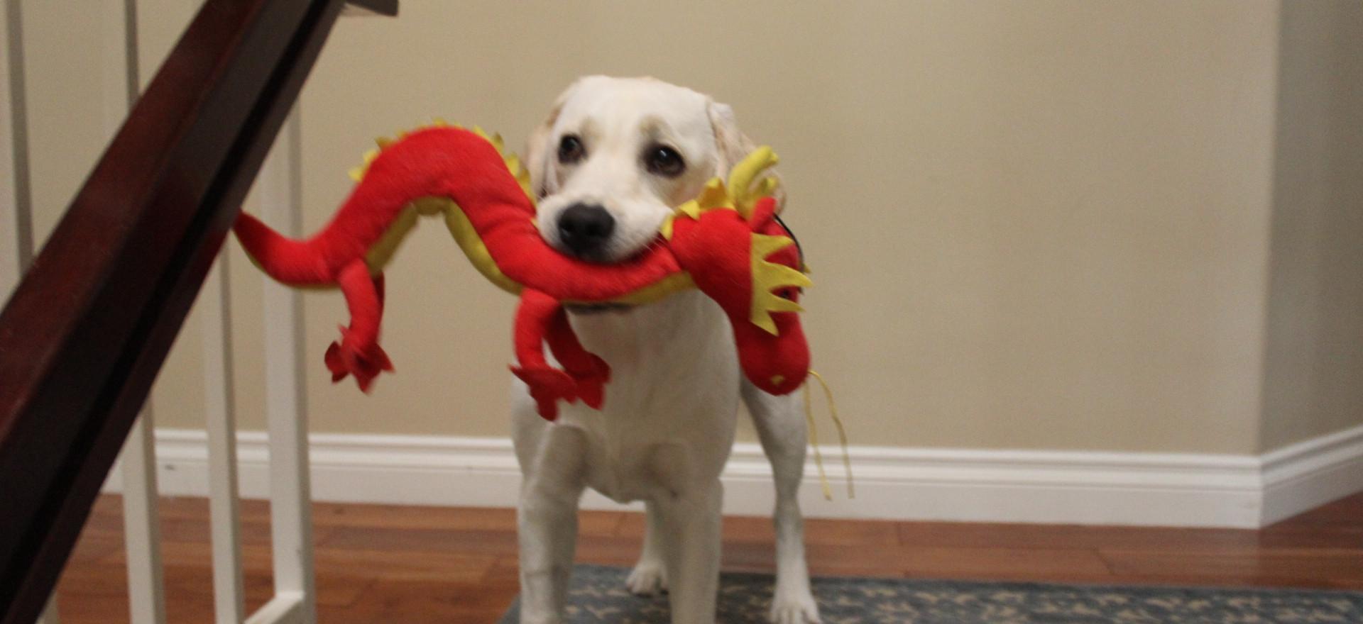 Darcy with dragon.jpg