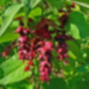 arbre-faisans-purple-rain_FR_500_0002756