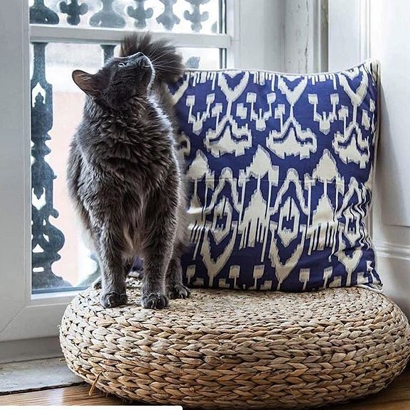 🦁 cat lovers this is for you 💙._._✨ From India, a beautiful blue cushion, on cotton fabric._._👉 A