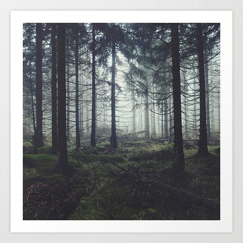 Through the Trees - Tordis Kayma
