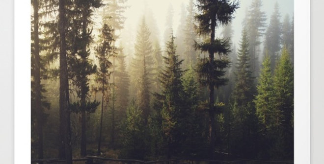 Sunrise Forest - Kevin Russ